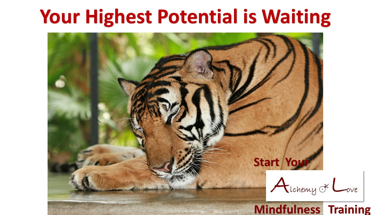 tiger sleeping highest potential is waiting mindfulness training alchemy of love