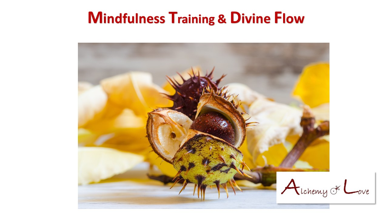 Yoga Meditation Mindfulness Training and Divine Flow