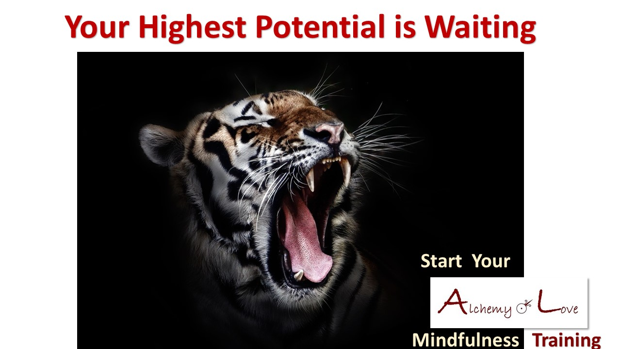 Alchemy of love mindfulness training Your highest potential is waiting