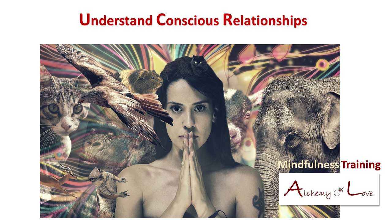 why vegetarian: conscious relationships