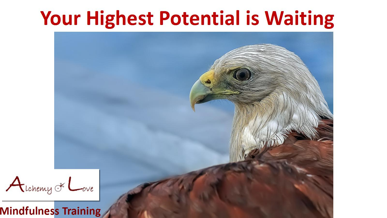divergent thinking: highest potential eagle