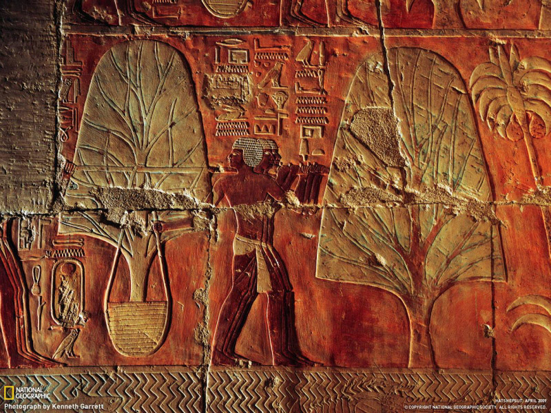 herbs tree from journey to Sacred Land of Punt carved Ancient Egypt temple Deir el-Bahri Queen Hatshepsut